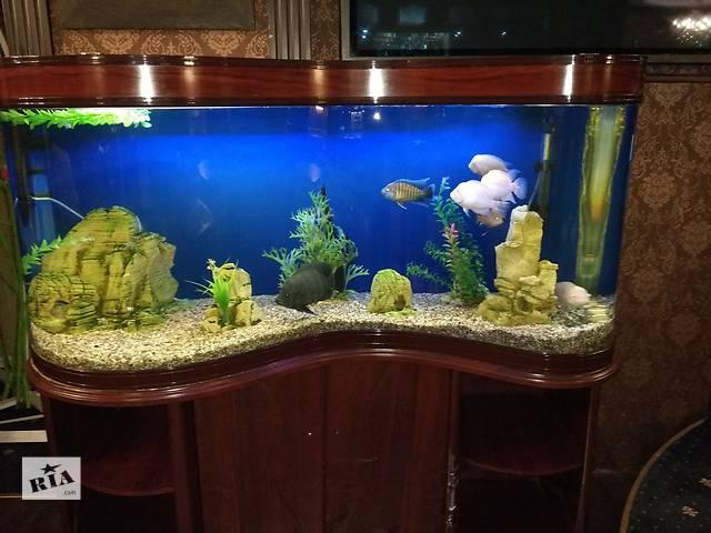 продам Аквариум Minjiang (волна) 430 л с рыбками, полная комплектация бу в Киеве