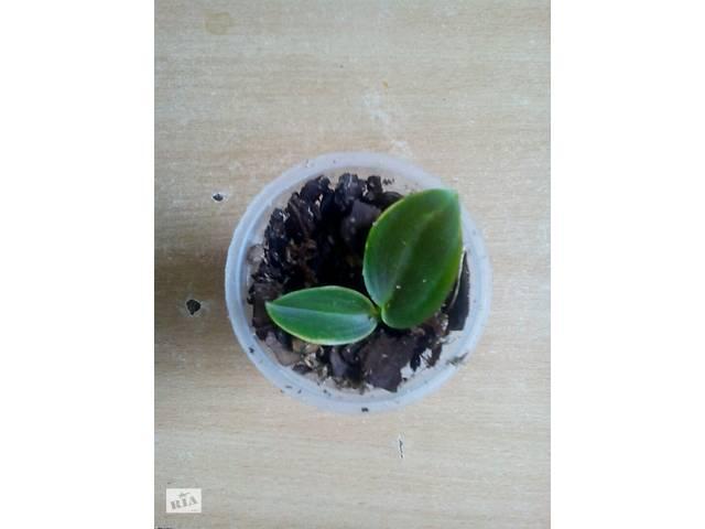 купить бу Детка орхидеи в Чугуеве
