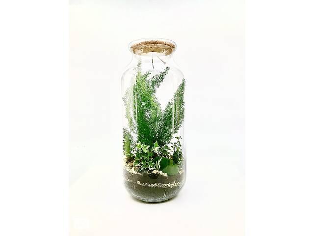 Флорариум maxi Аспарагус