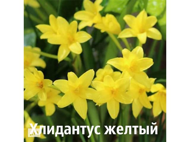 продам Хлидантус бу в Днепре (Днепропетровск)