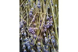 Лаванда, сухие цветы