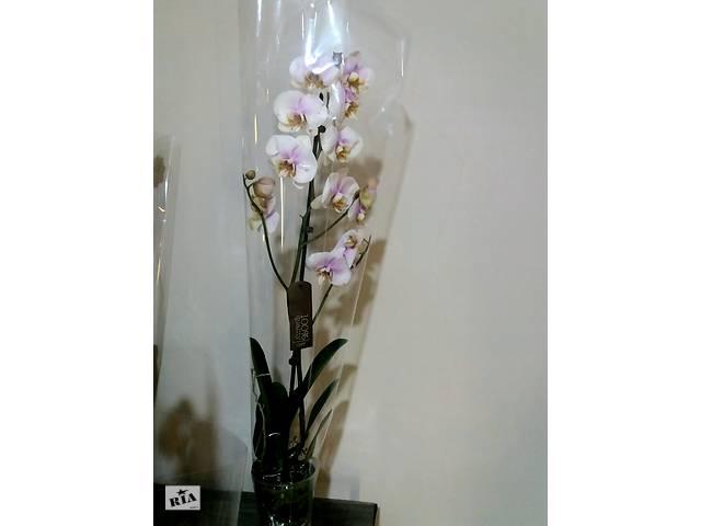Орхідеї,опт та роздріб- объявление о продаже  в Благовіщенську (Ульяновка)