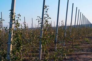 Продам столбики для садов, виноградников, обоев, ограждений
