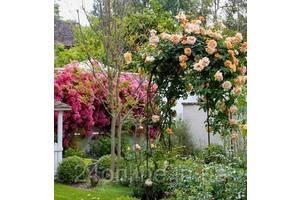 """Садовая арка для роз, винограда и прочих вьюнов """"Spirit"""" (шпалера, опора для цветов) 2300х1450х500 мм"""
