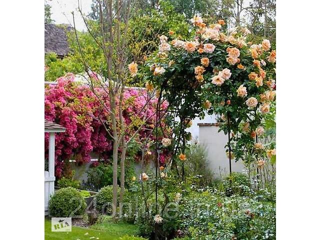 продам Садова арка для троянд, винограду та інших в'юнів& quot; Spirit& quot; (Шпалера, опора для квітів) 2300х1450х500 мм бу в Харкові