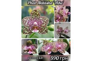 Сортові орхідеї з Європи і Азії