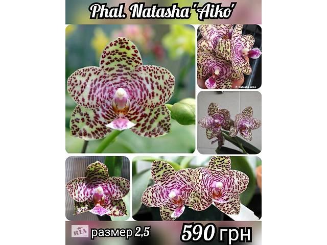 Сортовые орхидеи с Европы и Азии- объявление о продаже  в Курахово