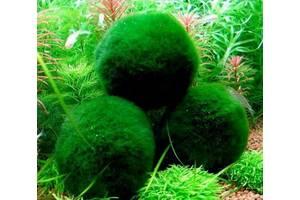 Эгагропила - Кладофора. Темно-зеленый бархатный шар в аквариуме!