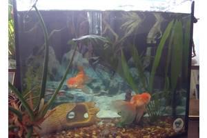 Аквариумы и все для аквариумов