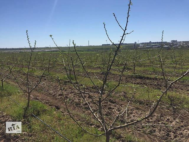 продам Яблочный сад 37 Га г. Херсон бу  в Украине