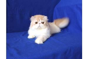 Персидські коти