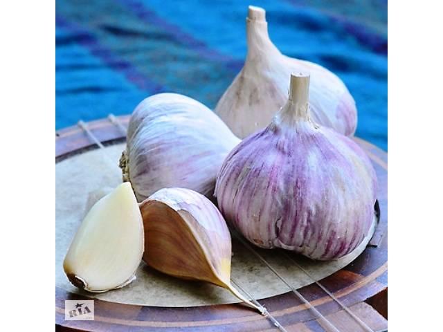 продам чеснок продам семена чеснока бу в Умани