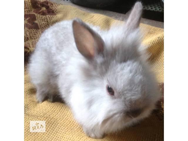бу декоративные кролики в Тернополе