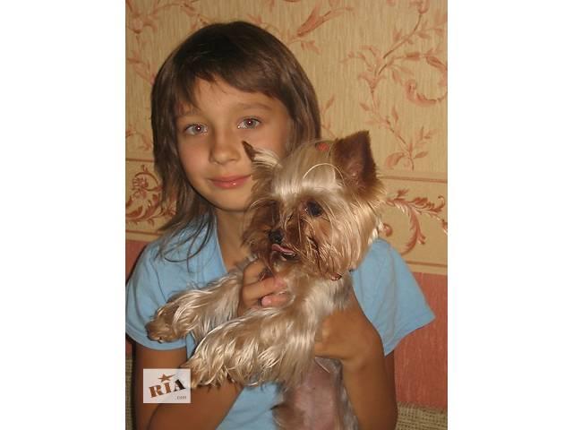 продам Йорки з документами і прививками можна вивозити за кордон бу в Києві