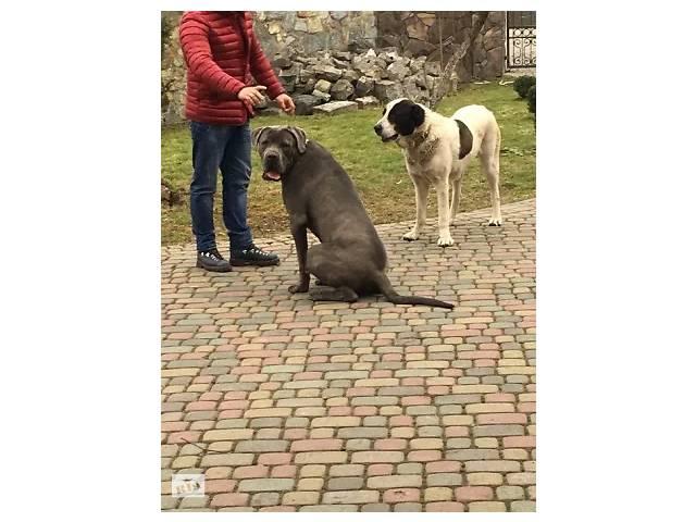 купить бу Дрессировка собак  в Украине