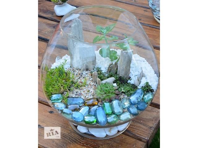 Флорариум с суккулентами (композиция из живых растений) . Акция - объявление о продаже  в Киеве