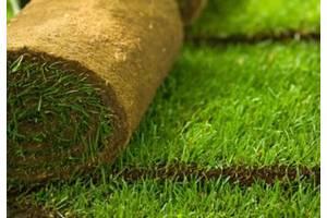 Газон рулонный и посевной, озеленение, автополив