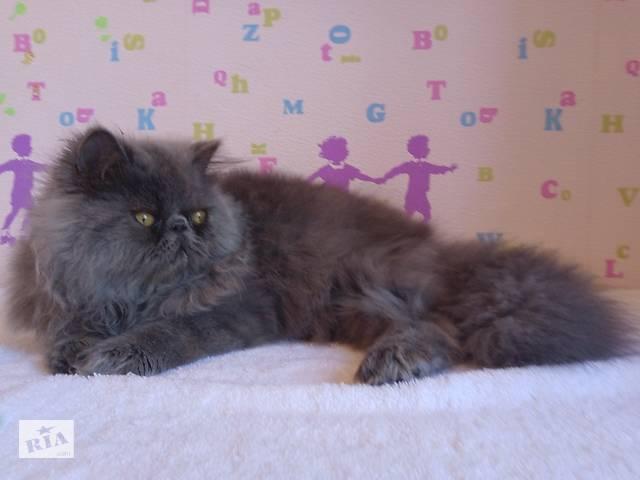 Шикарние котята- объявление о продаже  в Херсоне
