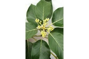 Субтропические растения