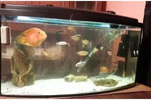 Продам аквариум на 180 литров, вместе с рыбками.