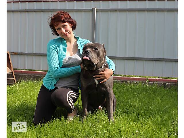 Гостинница для собак- объявление о продаже   в Украине