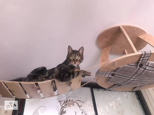 Игровые комплексы для кошек- объявление о продаже  в Черкассах