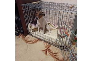 TRIXIE переноска клітка для собак з пластиковим піддоном 78х55х62һ см