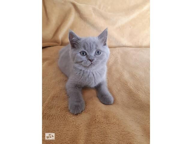 Шотландские котята- объявление о продаже  в Вишневом