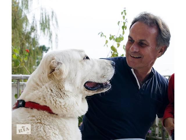 бу Профессиональная дрессировка собак. Интерактивные онлайн-консультации по воспитанию, дрессировке и коррекции поведения  в Україні