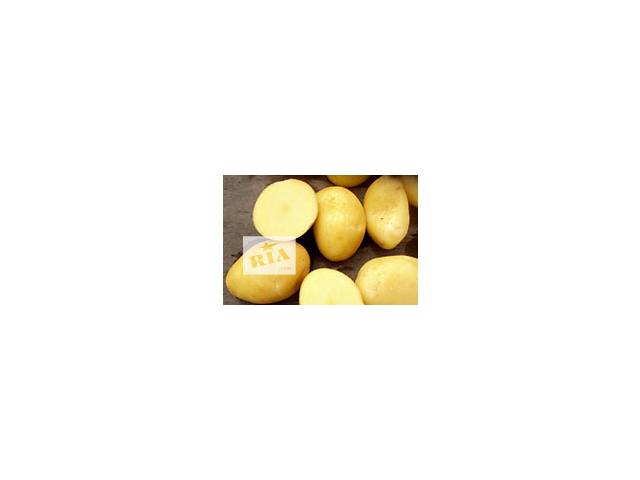 продам Картофель семенной Ривьера, Тирас и другие сорта. бу в Виннице
