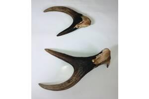 Рога оленя разные