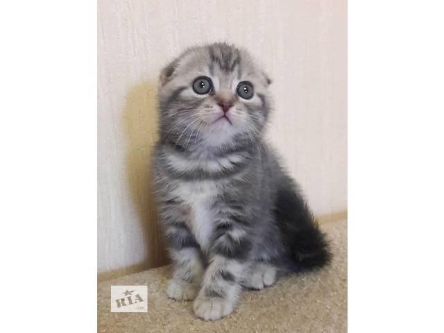 купить бу Клубные шотландские котята в Черкассах