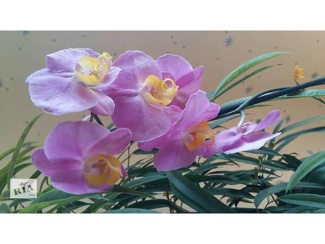 бу Комнатные растения, рассада и цветы в Харькове