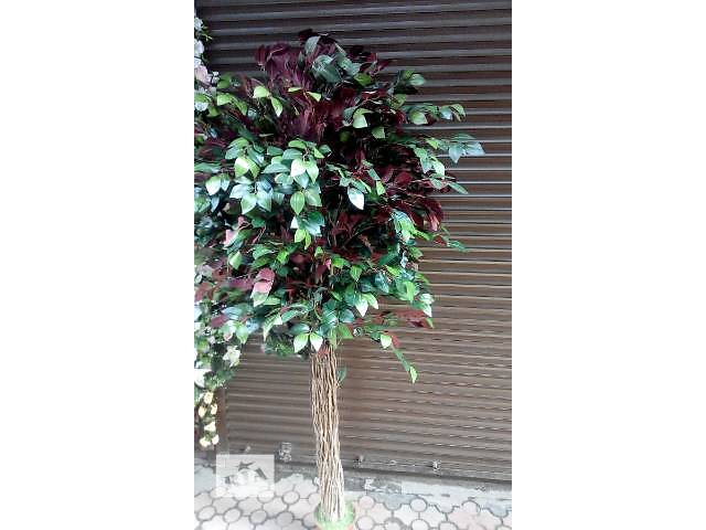 Комнатные растения, рассада и цветы- объявление о продаже  в Днепре (Днепропетровск)