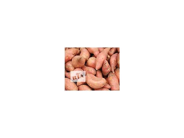 Батат корнеплоди, картопля.- объявление о продаже  в Полтаве