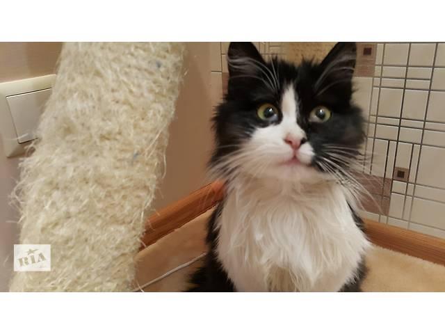 Кошечка ищет дом- объявление о продаже  в Хмельницком