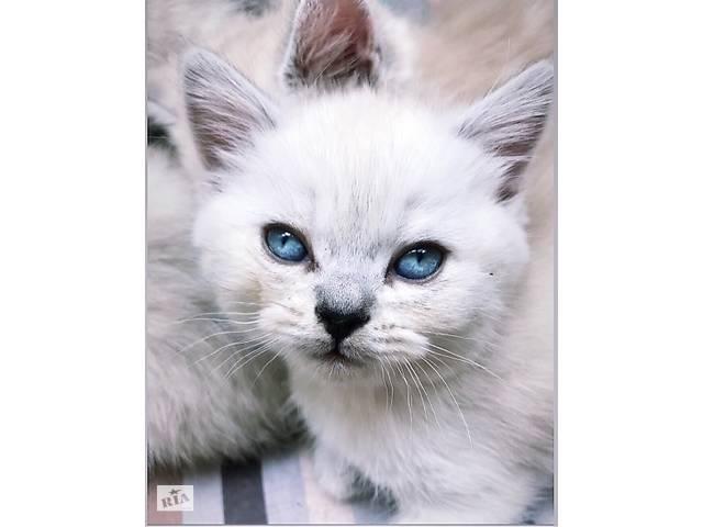 купить бу Кошенята в Тернополе