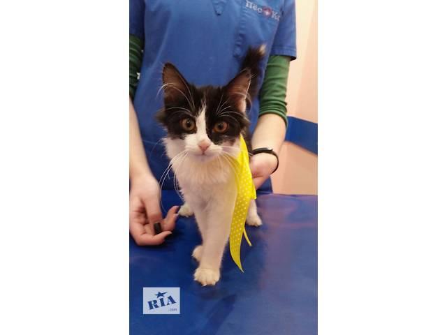 продам котенок девочка ищет дом бу в Харькове