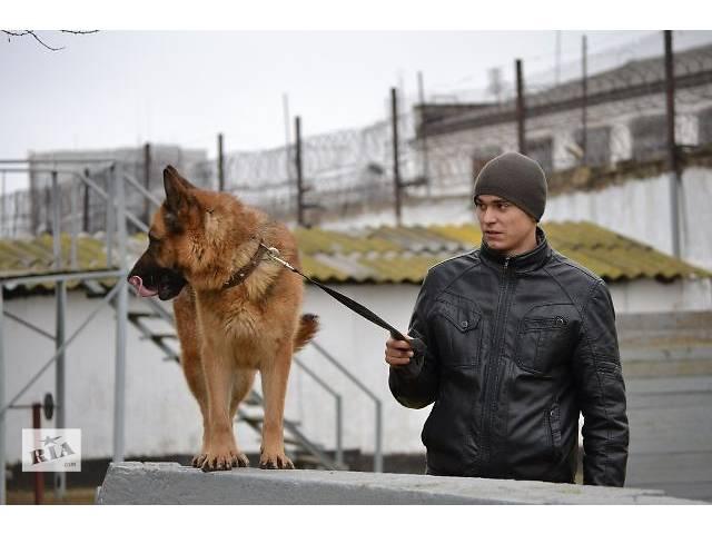 продам Дрессировка собак лучшие кинологи Одессы бу в Одессе