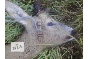 Нові Товари для полювання