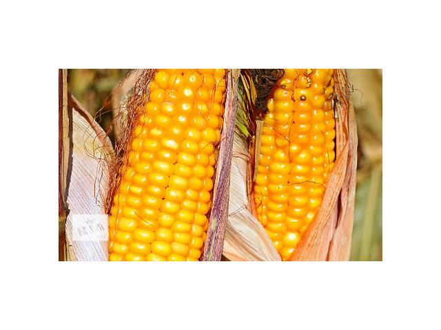 Насіння кукурудзи Гран 310 Вніс- объявление о продаже  в Киеве