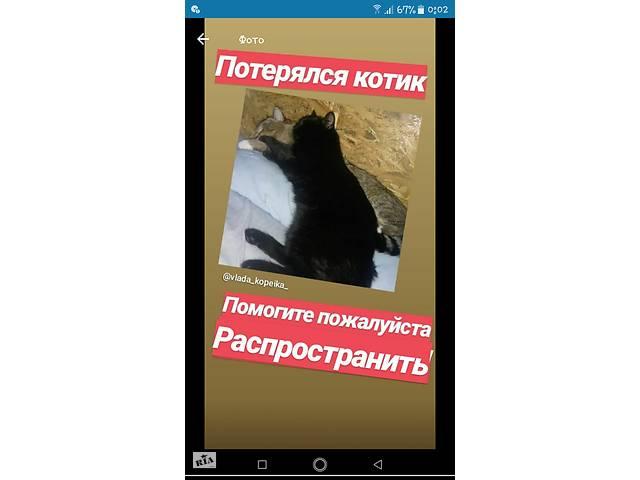 купить бу ПРОПАЛ ЧЁРНЫЙ КОТ!!! ЗА ВОЗНАГРАЖДЕНИЕ  в Украине