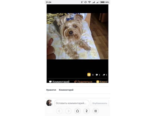 бу Пропала собака!!! в Хмельницкой области