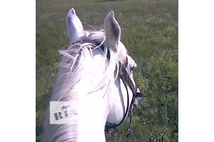 Обучение верховой езде. Отдых с лошадьми в живописном месте