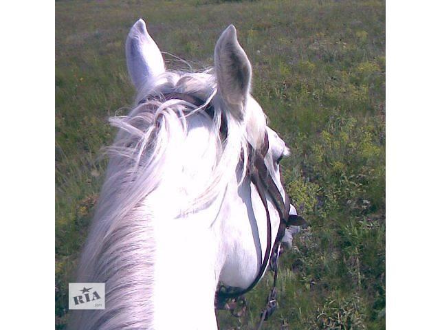 Обучение верховой езде. Отдых с лошадьми в живописном месте- объявление о продаже   в Украине