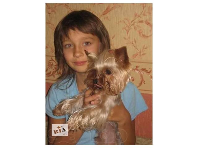 купить бу  Очаровательные девчонки и мальчишки привитые с родословной в Киеве