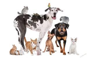 Присмотр за животными, передержка