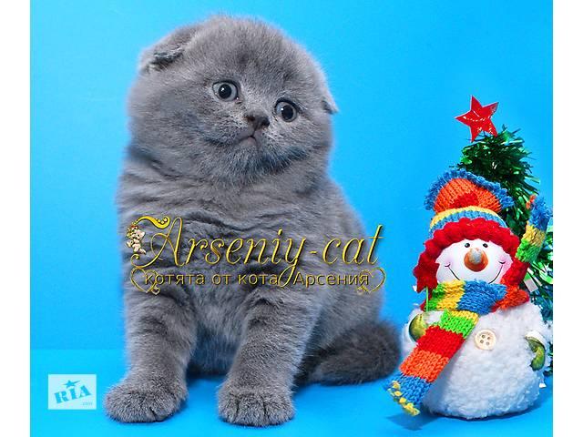 продам Плюшевый мишутка -  чудесный новогодний подарок! бу в Киеве