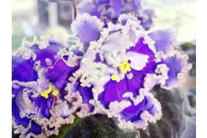 Кімнатні рослини, квітки