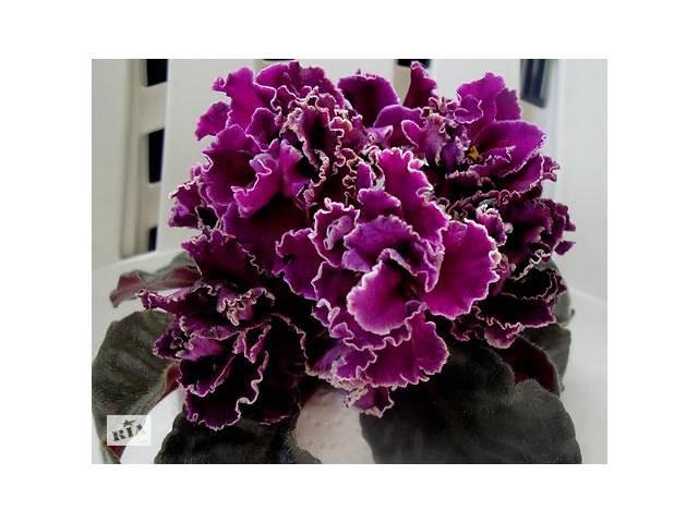 купить бу Фиалки сортовые, детка Леший (Макуни) - красивые цветы в Киеве